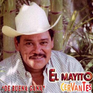 El Mayito Cervantes 歌手頭像