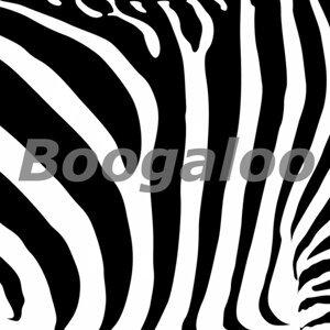 Zebras in the House 歌手頭像