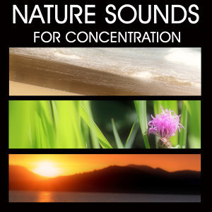 Nature Sounds for Concentration