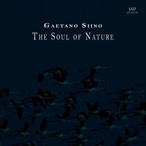 Gaetano Siino 歌手頭像