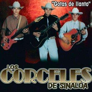 Los Corceles De Sinaloa 歌手頭像