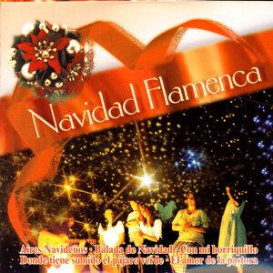 Navidad Flamenca (Popular Songs) 歌手頭像