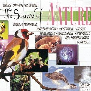 Naturgeräusche 歌手頭像