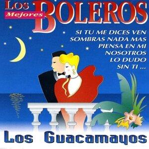 Los Guacamayos 歌手頭像