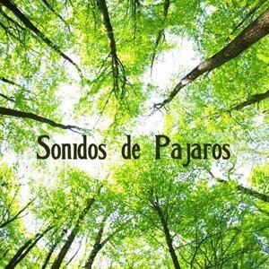 Sonidos De La Naturaleza Relax アーティスト写真