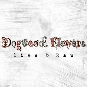 Dogwood Flowers 歌手頭像