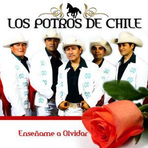 Los Potros de Chile 歌手頭像