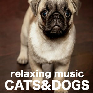 Pet Care Music Therapy 歌手頭像