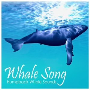 Whale Song 歌手頭像