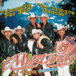 Los Mustangs Del Norte De Chihuahua 歌手頭像