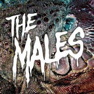 The Males 歌手頭像