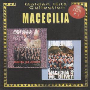 Macecilia 歌手頭像