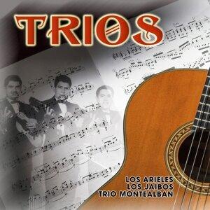 Los Arieles | Los Jaibos | Trío Montealbán 歌手頭像