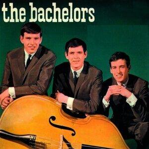 Bachelors 歌手頭像