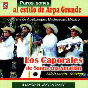Los Caporales de Santa Ana Amatlan 歌手頭像