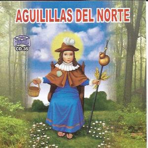 Aguilillas Del Norte 歌手頭像