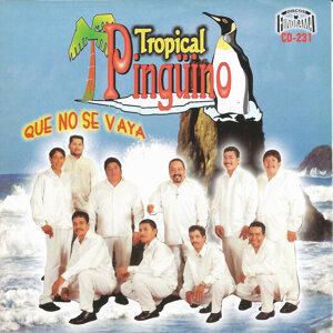Tropical Pinguino 歌手頭像