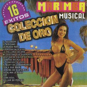 16 Exitos Con Marimba 歌手頭像