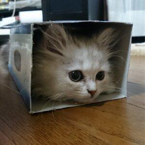 ゆき猫 歌手頭像