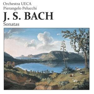 Orchestra UECA, Pierangelo Pelucchi 歌手頭像