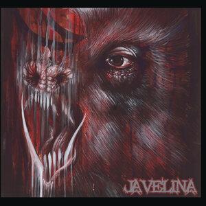 Javelina