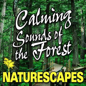 Naturescape 歌手頭像