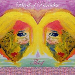 Bird of Paradise 歌手頭像