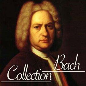 Giovanni Cassani, Accademia Musicale 歌手頭像
