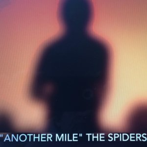 The Spiders 歌手頭像