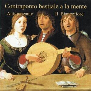 Antiquocanto, Il Biancofiore 歌手頭像