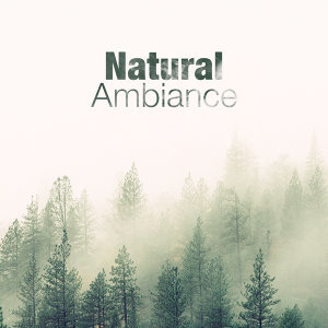 Ambiance nature 歌手頭像