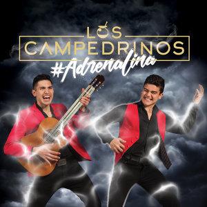 Los Campedrinos 歌手頭像