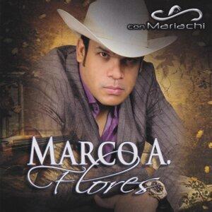 Marco a Flores 歌手頭像