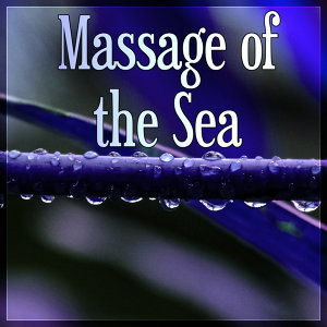 Sea Tranquility Academy 歌手頭像