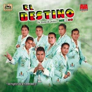 El Destino 歌手頭像