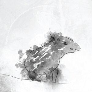 Tapirus 歌手頭像