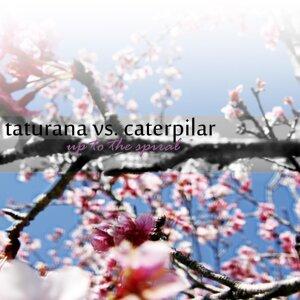 Taturana vs. Caterpilar 歌手頭像