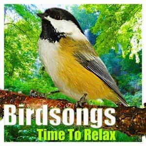 Bird Robin 歌手頭像