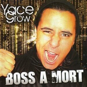 Yace Grow 歌手頭像
