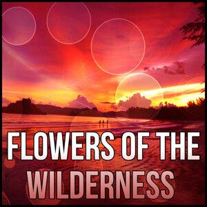 Lotus Flower Music Masters 歌手頭像