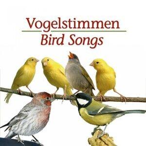 Vogelstimmen 歌手頭像
