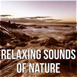 Awesome Nature Sounds Ensemble 歌手頭像