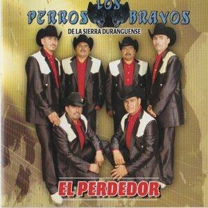 Los Perros Bravos De La Sierra Duranguense 歌手頭像