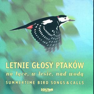 Letnie Glosy Ptakow 歌手頭像