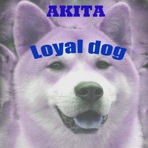 Akita 歌手頭像