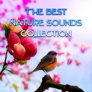 Nature Collection 歌手頭像
