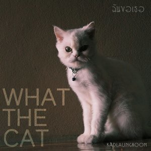 What the Cat 歌手頭像