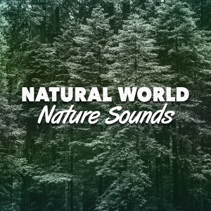 Mediation Sounds of Nature 歌手頭像