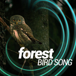 Forest Sounds Relaxing Spa Music Singing Birds 歌手頭像