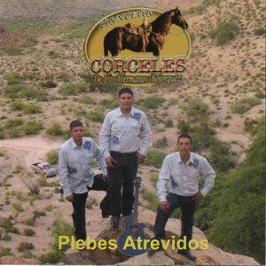 Los Nuevos Corceles de Los Hermanos Bojorquez 歌手頭像